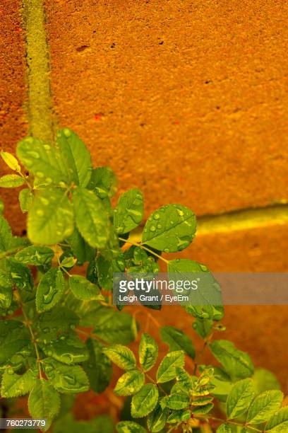 close-up of fresh green plant - leigh grant stock pictures, royalty-free photos & images