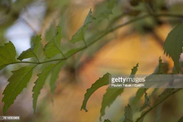 close-up of fresh green plant - paulien tabak photos et images de collection