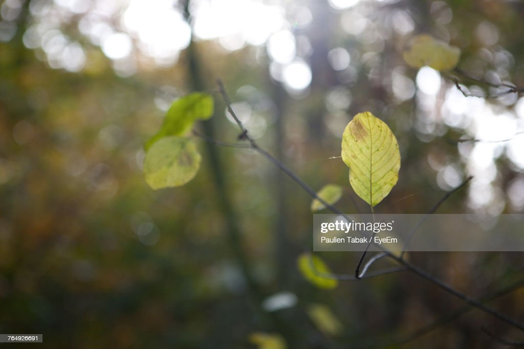 Close-Up Of Fresh Green Plant : Stockfoto