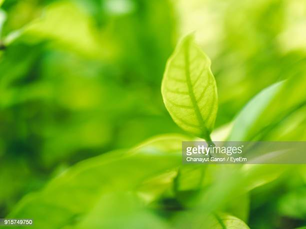 close-up of fresh green plant - chanayut stock photos and pictures