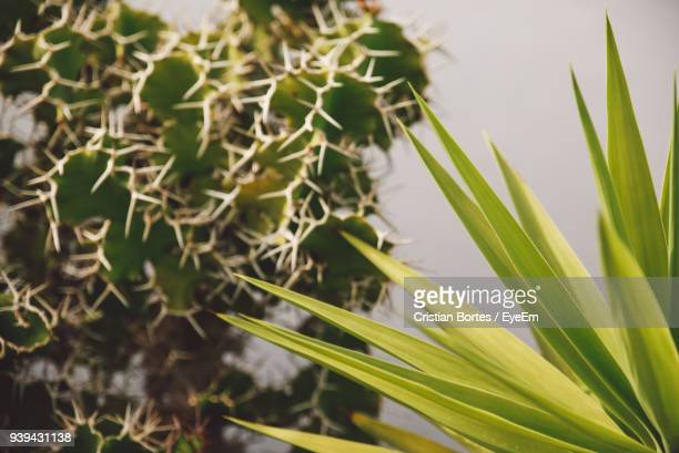close-up of fresh green plant - bortes stock photos and pictures