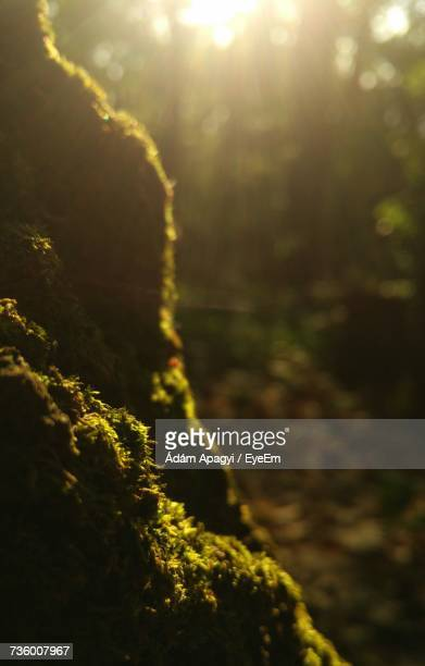 Close-Up Of Fresh Green Plants In Forest