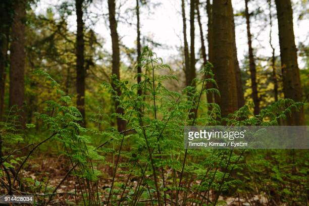 close-up of fresh green plants in forest - オトレイ ストックフォトと画像