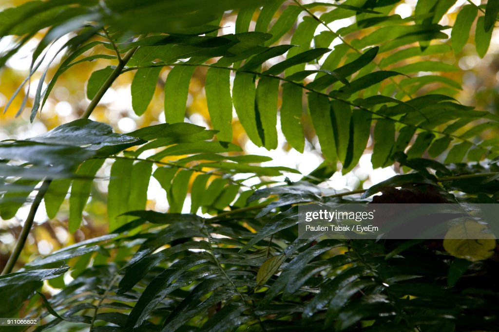 Close-Up Of Fresh Green Plants In Water : Stockfoto