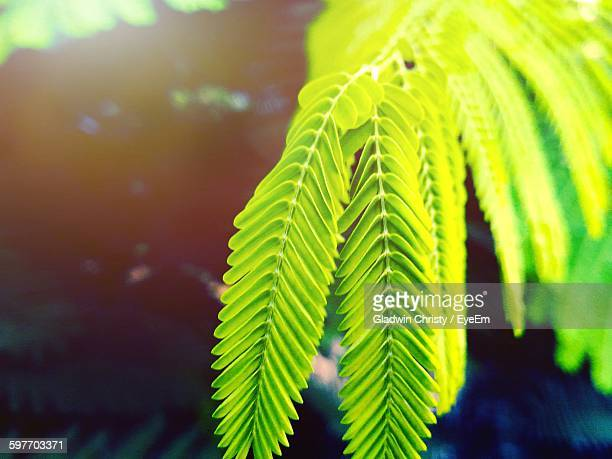 close-up of fresh green twigs - thiruvananthapuram stock photos and pictures