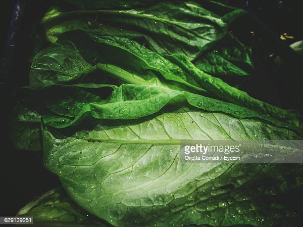 Close-Up Of Fresh Leafy Vegetable