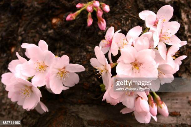 Close-Up Of Fresh Pink Flowers Blooming In Spring