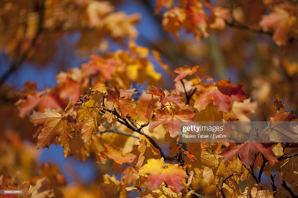 Close-Up Of Fresh Pink Flowers On Tree During Autumn : Stock Photo