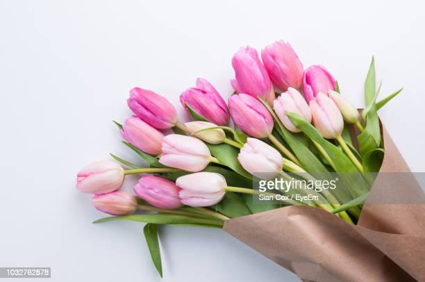 close-up of fresh pink tulips against white background - tulipano foto e immagini stock