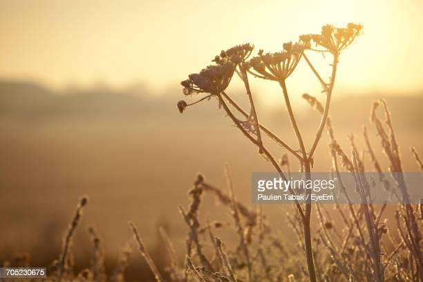 close-up of fresh plants against sky during sunset - paulien tabak stock-fotos und bilder