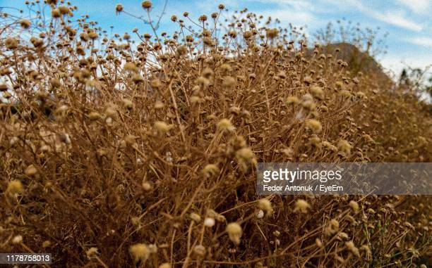 close-up of fresh plants on field against sky - fedor stock pictures, royalty-free photos & images