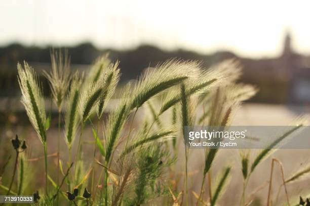 Close-Up Of Fresh Plants On Field Against Sky