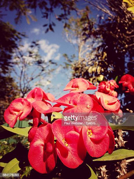 close-up of fresh red flowers blooming in garden - the webster stock pictures, royalty-free photos & images