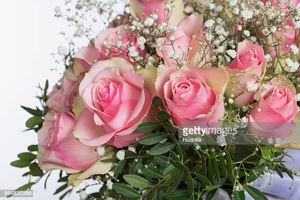 Close-up of fresh roses against white background
