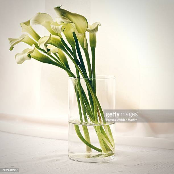 Close-Up Of Fresh White Calla Lilies In Vase Against Wall