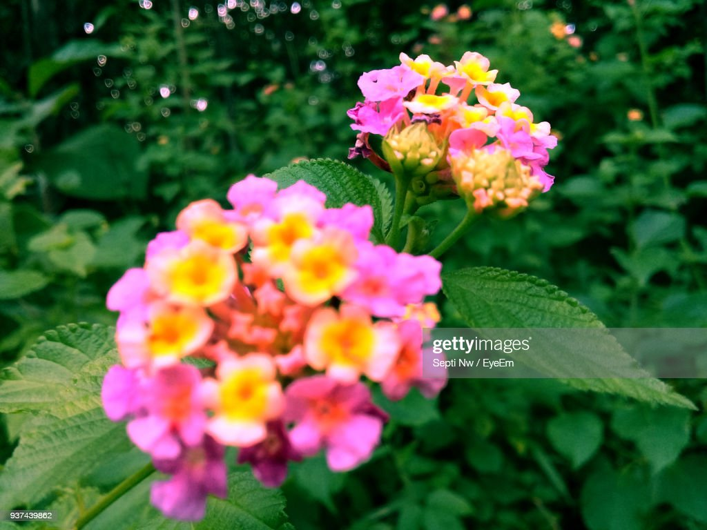 Closeup Of Fresh White Flowers Blooming In Park Stock Photo Getty