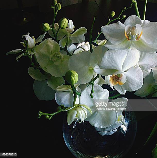 Close-Up Of Fresh White Orchids In Vase Against Black Background