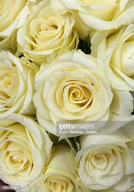 Close-Up Of Fresh Yellow Roses Bouquet