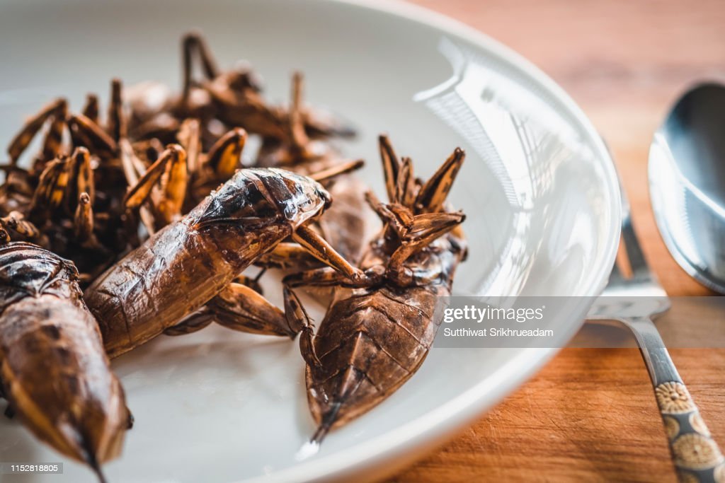 Close-Up Of Fried Giant Water Bug Served On White Plate : Stock Photo