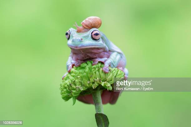 close-up of frog and snail on flower - invertebrate stock pictures, royalty-free photos & images