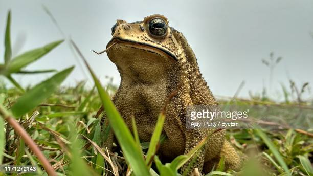 close-up of frog on grass against sky - frog stock pictures, royalty-free photos & images