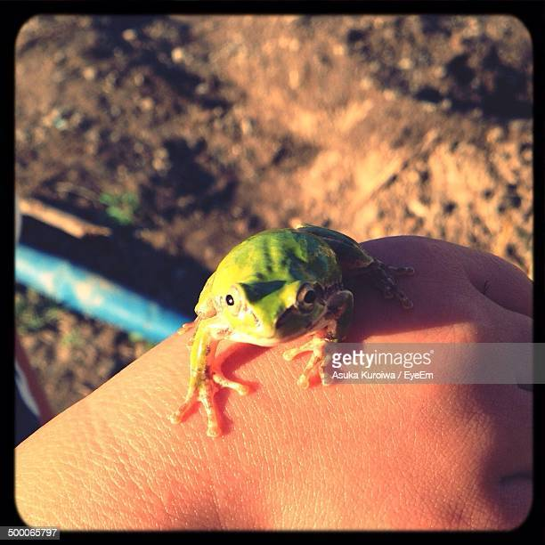 close-up of frog on hand against blurred background - asuka stock pictures, royalty-free photos & images