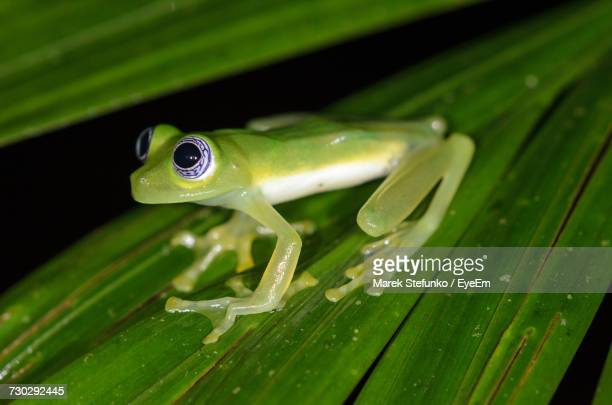 close-up of frog on leaf - marek stefunko stock pictures, royalty-free photos & images