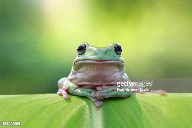 close-up of frog on leaf - tree frog stock pictures, royalty-free photos & images