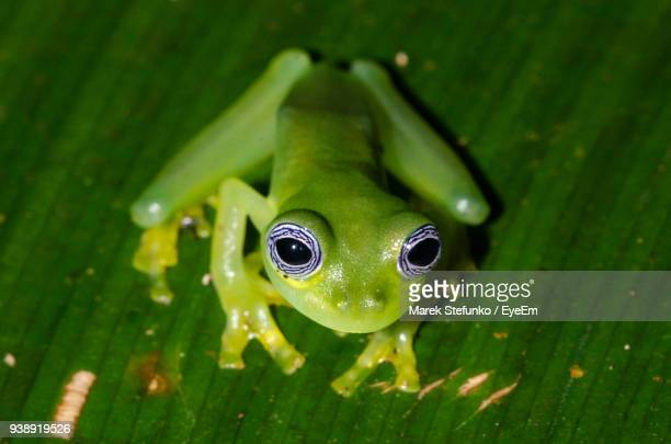 close-up of frog on leaf - marek stefunko stock photos and pictures
