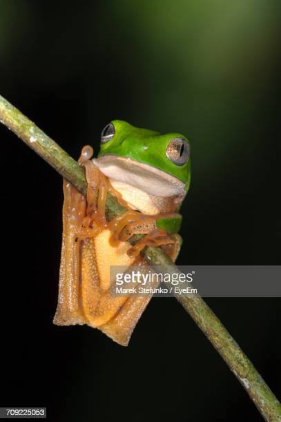 close-up of frog on plant against black background - marek stefunko eyeem stock photos and pictures