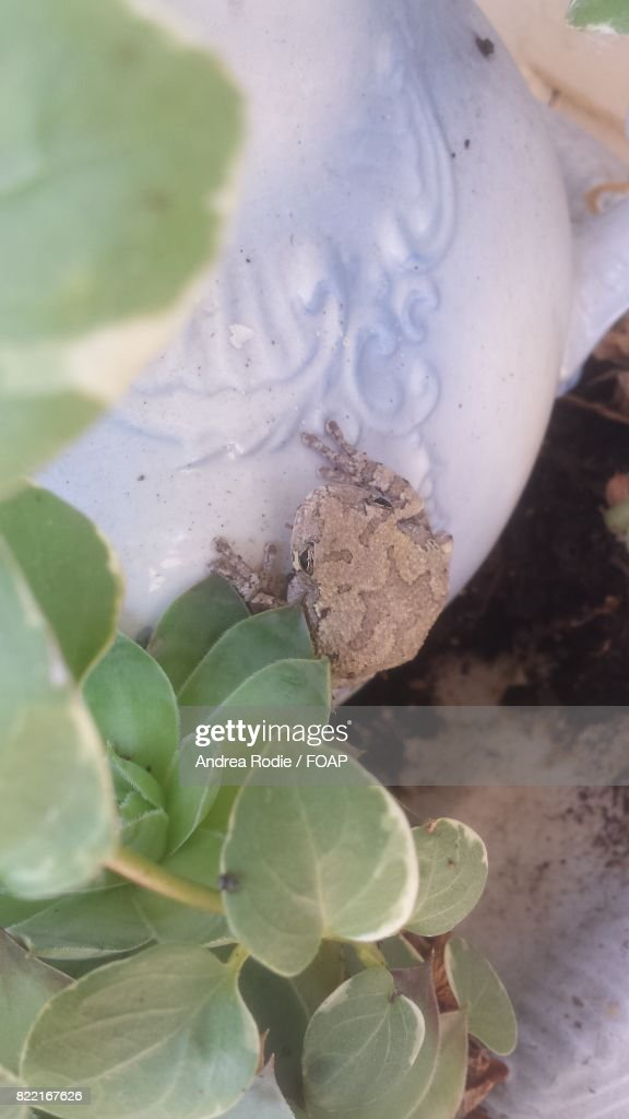 Close-up of frog on pot : Stock Photo