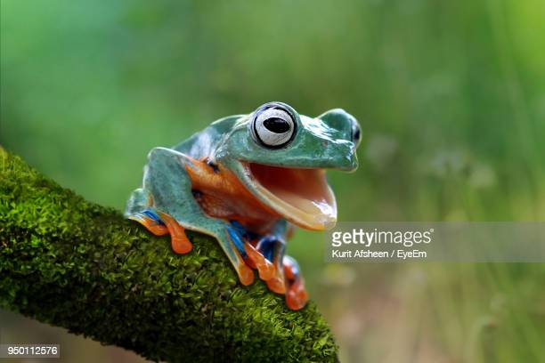 close-up of frog on tree - grenouille photos et images de collection