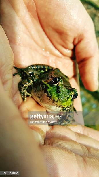 Close-Up Of Frog On Wet Hands