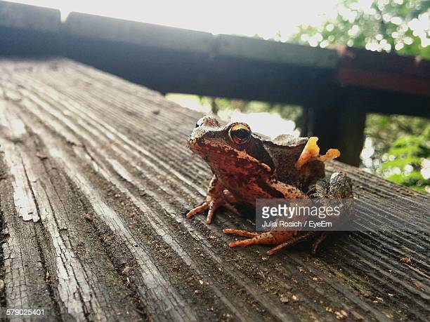 Close-Up Of Frog Outdoors