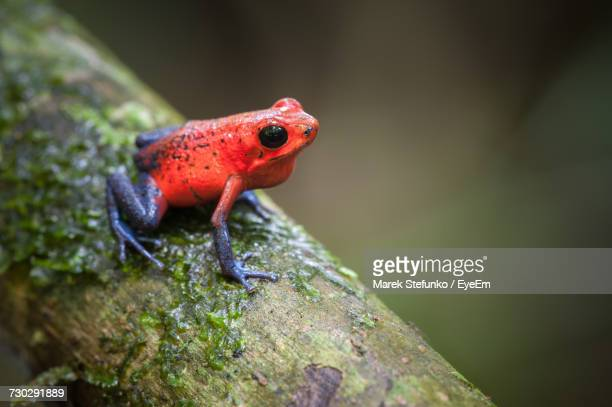 close-up of frog - marek stefunko stock pictures, royalty-free photos & images