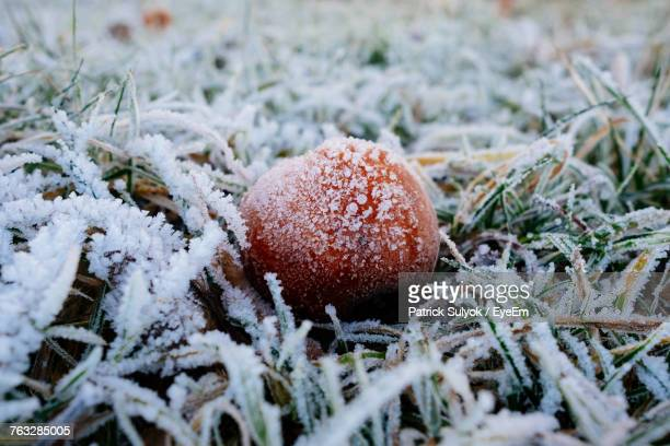 Close-Up Of Frozen Apple On Field