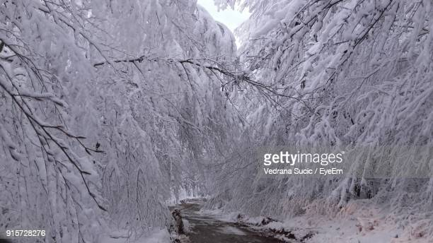 Close-Up Of Frozen Bare Tree Against Mountain