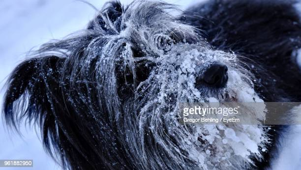 Close-Up Of Frozen Dog