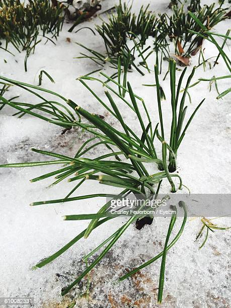 close-up of frozen grass during winter - charley green stock pictures, royalty-free photos & images