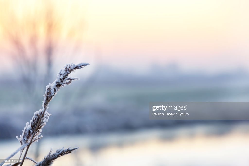 Close-Up Of Frozen Plant During Winter : Stockfoto