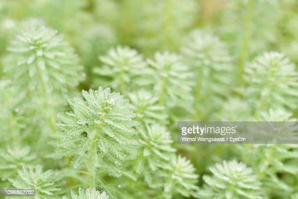 close-up of frozen plant - wimol wongsawat stock photos and pictures