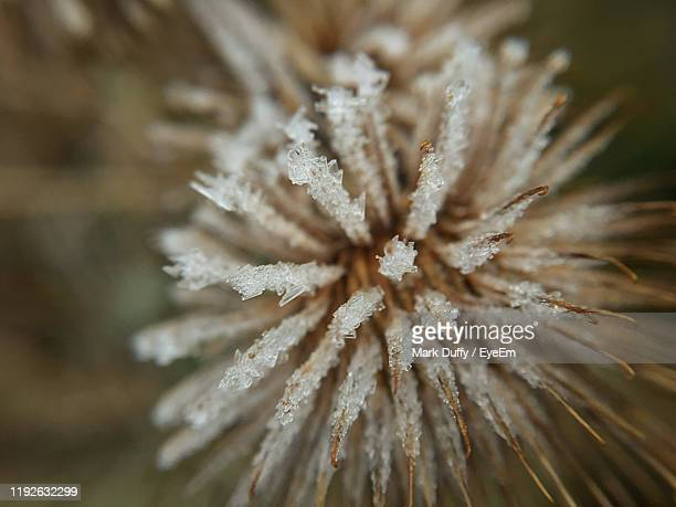 close-up of frozen plant - mark bloom stock pictures, royalty-free photos & images