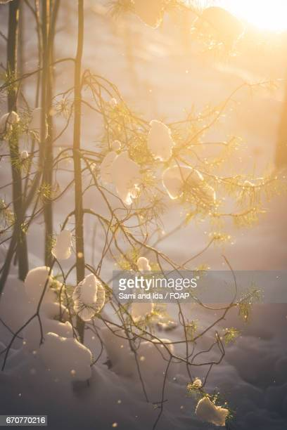 close-up of frozen plant - espoo stock pictures, royalty-free photos & images