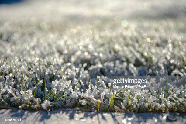 close-up of frozen plants during winter - eriksen stock pictures, royalty-free photos & images