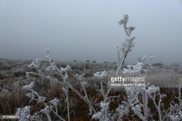 Close-Up Of Frozen Plants On Field Against Sky