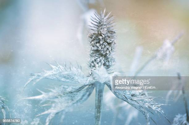 Close-Up Of Frozen Plants