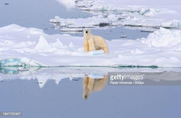 close-up of frozen sea - pack ice stock pictures, royalty-free photos & images