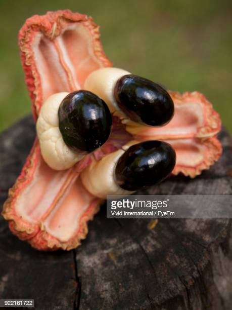 close-up of fruit on tree stump - bridgetown barbados stock pictures, royalty-free photos & images