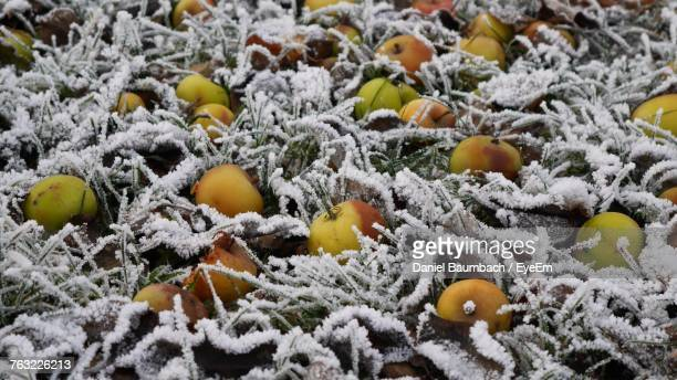 Close-Up Of Fruits On Snow