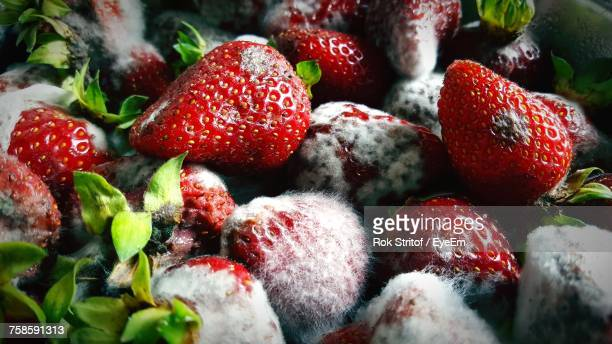 Close-Up Of Fungal Mold On Strawberries